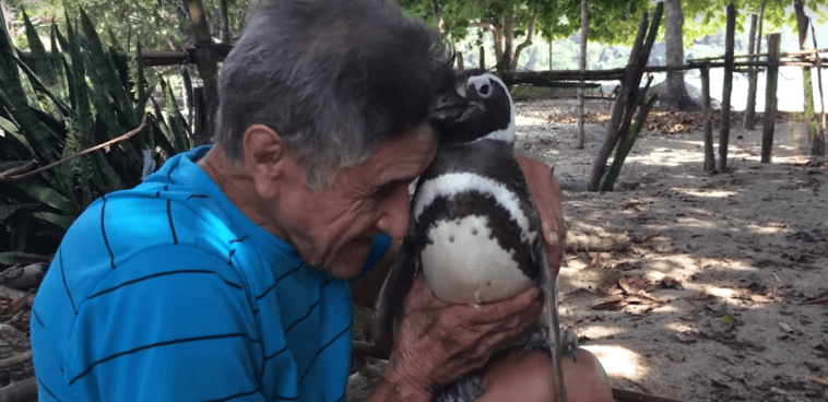 penguin swims 5000 miles